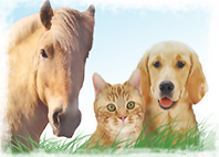 This Remedy for animals, dogs, cats and horses
